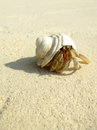 Hermis crab on the beach in andaman sea Royalty Free Stock Image