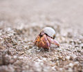 Hermit Crab Stock Photography