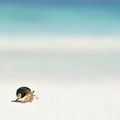 Hermit Crab on a beach Stock Images
