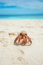 The hermit crab on beach Stock Photo