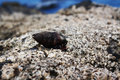 Hermit crab on the beach Royalty Free Stock Image