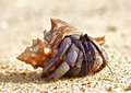 Hermit crab on a beach in andaman sea Stock Photo