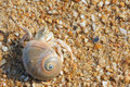 Hermit crab the close up of with its trumpet shell at sandbeach Stock Photos