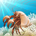 Hermit crab illustration with in coral reef against seabed background drawn in cartoon style Royalty Free Stock Image