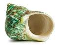 Hermit Crab Shell Stock Photo