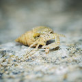Hermit crab walk a long the beach Royalty Free Stock Photos