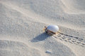 Hermit crab walking on the beach socotra yemen Stock Photography