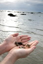 Hermit crabs leave to the sea Royalty Free Stock Photos