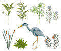 Heron bird and swamp plants. Marsh flora and fauna. Royalty Free Stock Photo