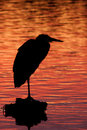 Heron at Dusk Stock Photos