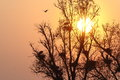 Heron heronry bird tree fly nest Stock Images