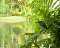 Heron hunting sitting on a branch near the pond she s on the hunt Stock Photography