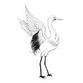 Heron isolated over white vector illustration Stock Photo