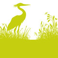 Heron in the reeds Royalty Free Stock Photo