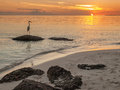 Heron on rock at beach at sunset great white fishing from white sand bahai honda key florida Stock Photo