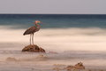 Heron on rock looks out to blurry sea, Sulawesi. Royalty Free Stock Photo