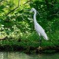 Heron On Shoreline