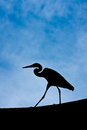Heron in Silhouette Royalty Free Stock Images