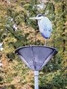 Heron standing on lantern