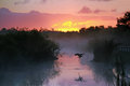 Heron at Sunrise in the Everglades Royalty Free Stock Photo