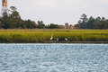 Herons on Coast by Wetland Marsh Stock Photo
