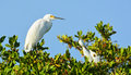 Herons and egrets in a tree perched Stock Images