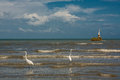 Herons and pelicans catching fish on the shore in Livingston Royalty Free Stock Photo