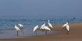 Herons on a sandy beach near the ocean Royalty Free Stock Photos