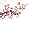 сherry blossoms branch background spring japanese symbol Royalty Free Stock Photos
