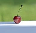 Herry imgaee of organic single cherry Stock Photography