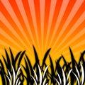 Het Gras van Black&White [04] Stock Foto's