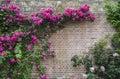 Hever Castle Gardens Royalty Free Stock Photo