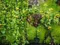 Hever kent uk june stone head peeking through flowers i in the garden at castle in on Stock Images