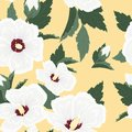 Hibiscus white flower buds leaves seamless pattern Royalty Free Stock Photo
