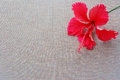 Hibiscus and emptiness red flower lay on brown cloth with a small vertical lines look simple full of blank Stock Image