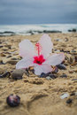 Hibiscus flower on the beach Royalty Free Stock Photo