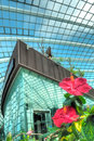Hibiscus, Flower Dome, Gardens by the Bay Stock Photography