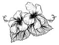 Hibiscus Flowers Vintage Style Woodcut Engraved Etching