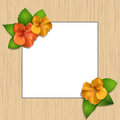 Hibiscus flowers and wooden frame Royalty Free Stock Images