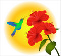 Hibiscus and humming bird Stock Photos