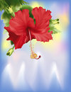 Hibiscus on Ice (with clipping path) Stock Photography