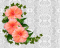 Hibiscus and lace Background Stock Photo
