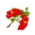 Hibiscus red branch tropical flowers on a white background vintage botanical vector