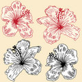 Hibiscus Set Royalty Free Stock Image