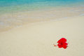 Hibiscus on Tropical Beach Royalty Free Stock Photo