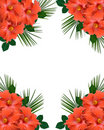 Hibiscus tropical Flowers border Royalty Free Stock Photo