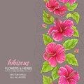 Hibiscus Vector Background