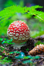 Hidden beauties deep in the forests red mushroom under a leaf forest Stock Photos