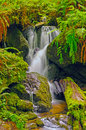 Hidden Falls in a fern Grotto Royalty Free Stock Photo