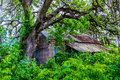 Hidden Old Abandoned Shack in Texas Royalty Free Stock Photo